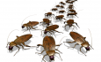 Эффективное уничтожение тараканов в домашних условиях