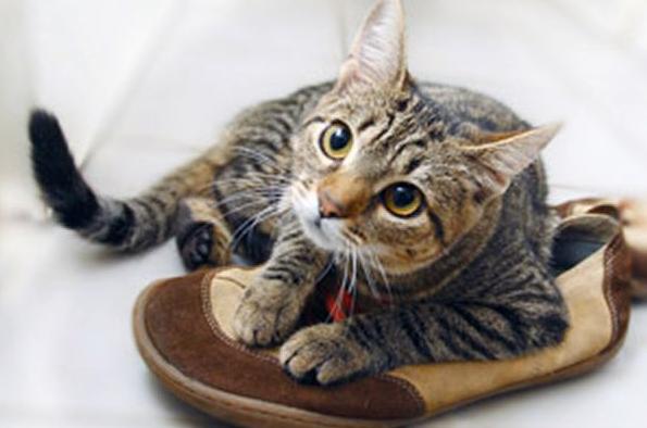 Вывести запах кота с обуви