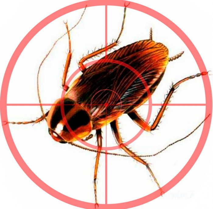312Уничтожения тараканов в домашних условиях