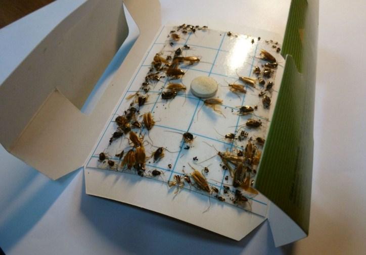 Ловушка для тараканов своими руками фото