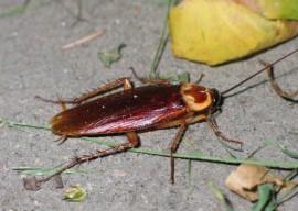 Клопы, тараканы. Как избавиться и методы борьбы