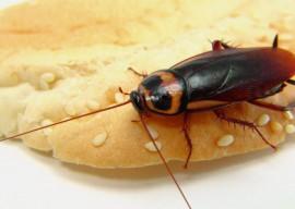 Избавиться от тараканов (все методы уничтожения)