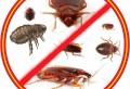 Как эффективно защитить свой дом от клопов и тараканов