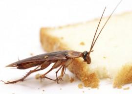 Народные средства от тараканов — самые эффективные