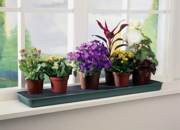 Нельзя сажать цветы дома 173
