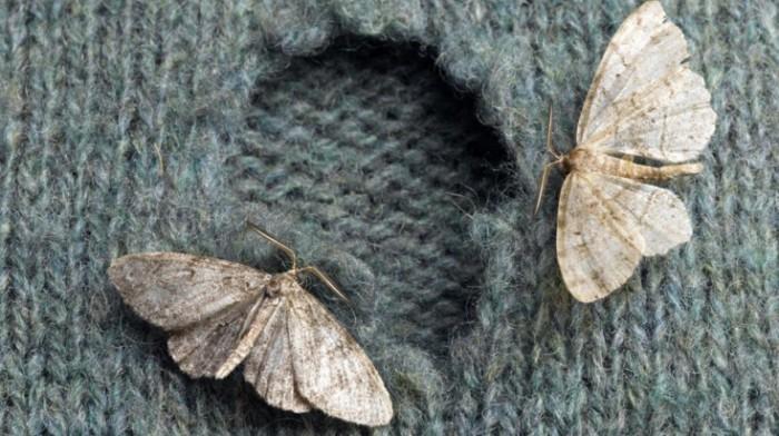 моль на свитере