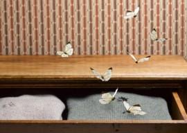 Как избавиться от моли в квартире: только действенные способы