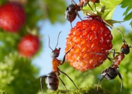 Рыжие муравьи в квартире, как избавиться от маленьких муравьев в квартире