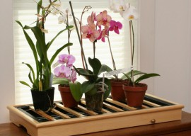 Как ухаживать за орхидеей: советы цветоводов