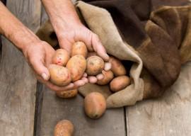 Хранение картофеля зимой или как сберечь весь урожай