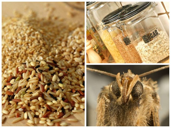 Пищевая моль - опасный вредитель на кухне