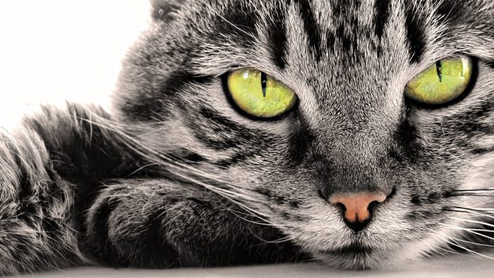 кот в заговоре от клопов
