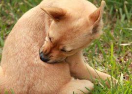 Капли от блох и клещей для собак: обзор средств