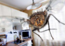 Как избавиться от мух в доме зимой?