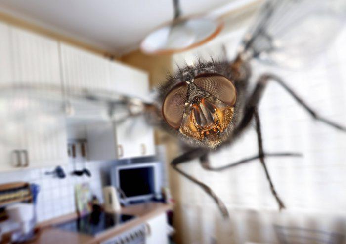 Муха на кухне