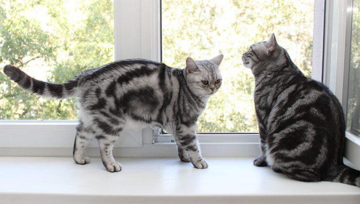 секреты борьбы с мочой кошек