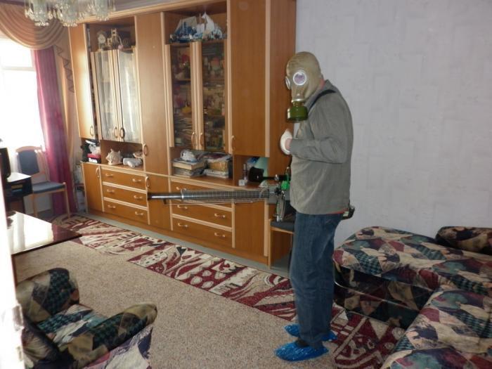 убиваем блох в квартире