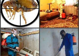 Подвальные блохи в квартире — как избавиться?