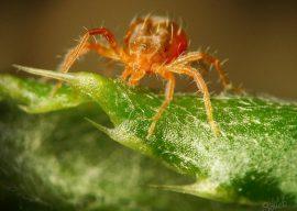 Как избавиться от паутинного клеща на комнатных растениях