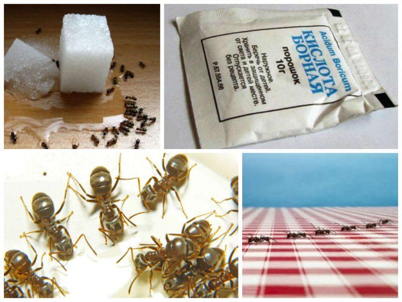 Народные методы уничтожения муравьев