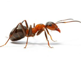 Борьба с домашними муравьями — эффективные методы