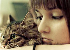 Опасны ли для человека блохи у кошки?