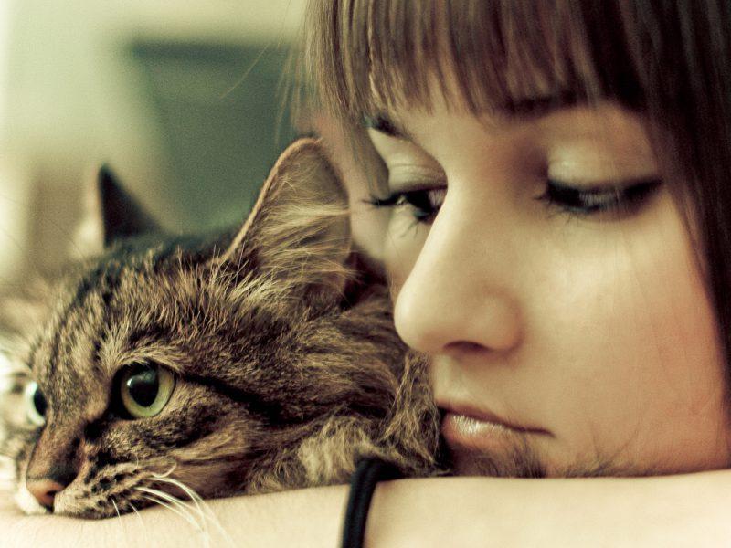 Опасность кошачьих блох для людей