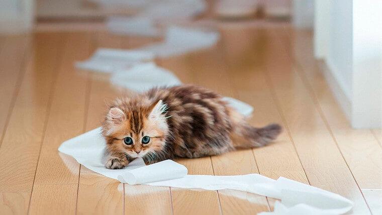 чем отмыть кошачью мочу с дивана