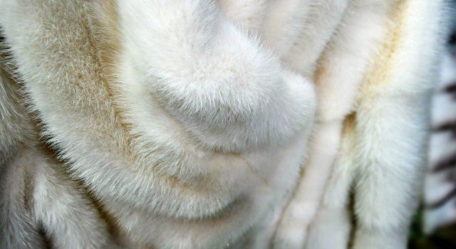отбеливание меха