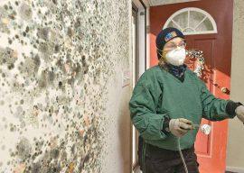 Действенное средство от плесени и грибка на стенах