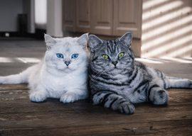 Какой запах не любят кошки: борьба с нежелательными привычками питомца