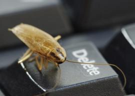 Домашние средства от тараканов и муравьев