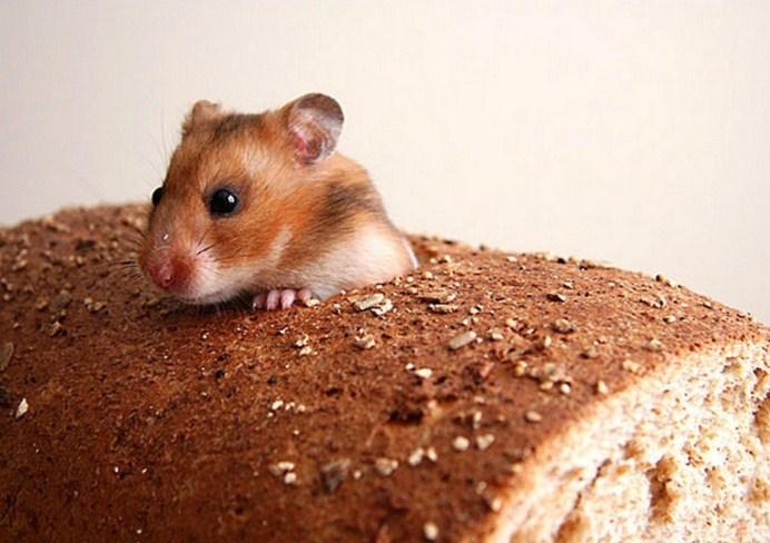 мышь в еде