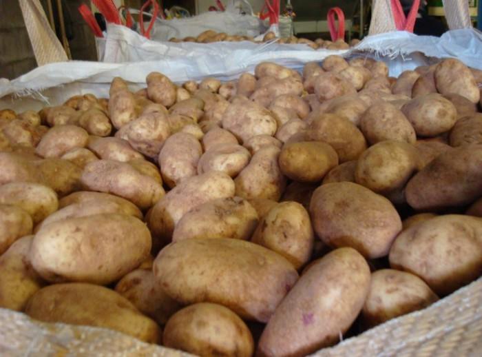 храним картофель в мешке