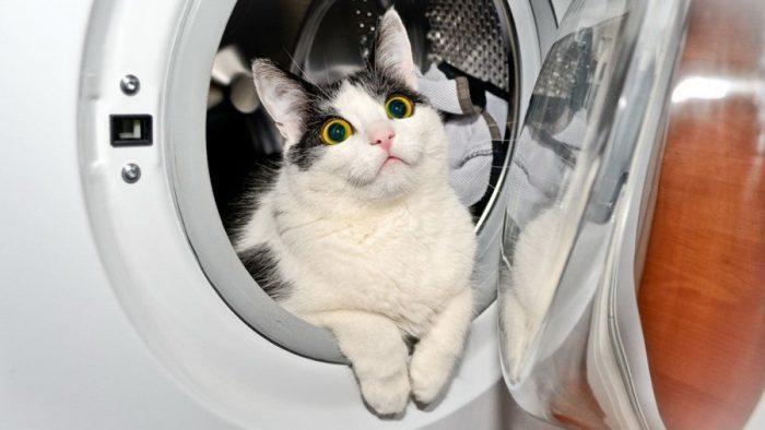 варианты для купания кошки