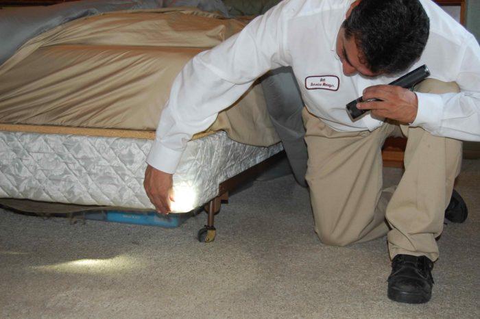 Как обнаружить постельных клопов
