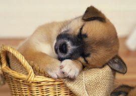 Народные средства от блох у собак