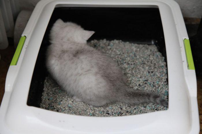 лоток в доме для кошки
