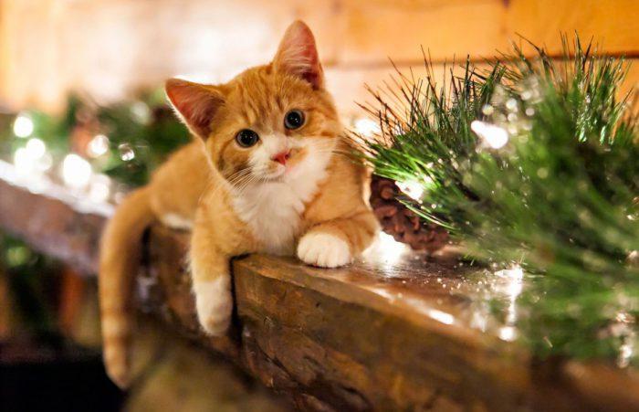 как избавиться от мочи кошек