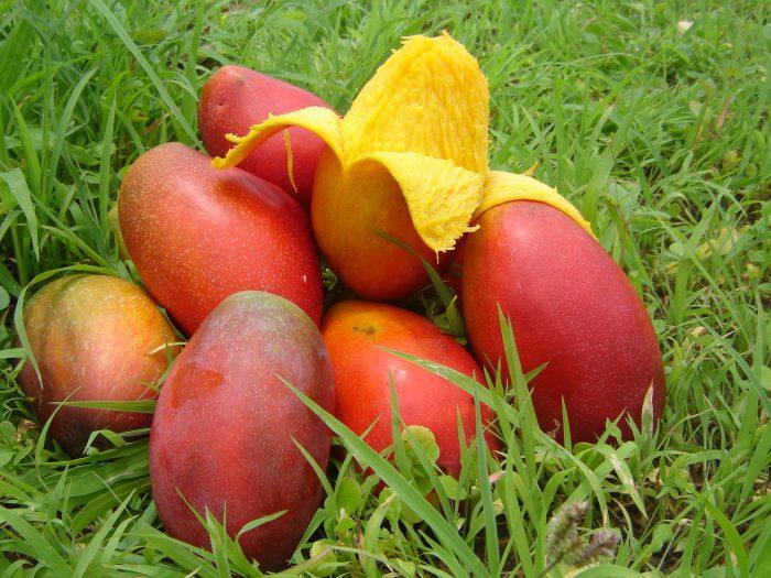 как раздвоить манго