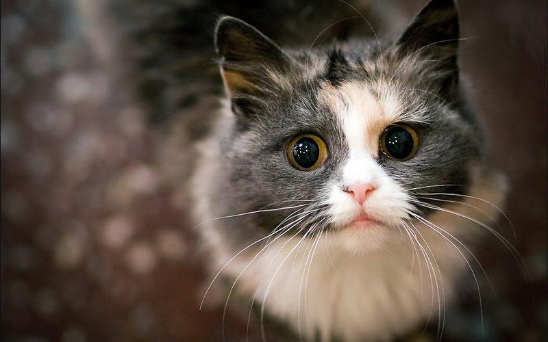как помыть коту уши
