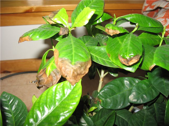Вредители на листьях